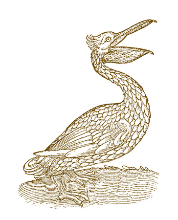 Pelican in side view with opened beak. Illustration after a historic woodcut from the 16th century Ilustração