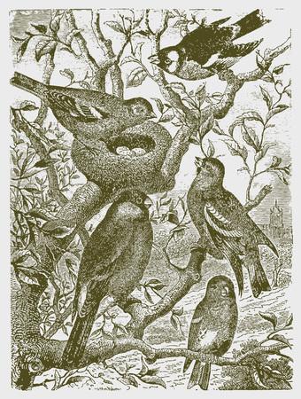Cinco tipos diferentes de pájaros sentados en un árbol alrededor de un nido con huevos. Ilustración según un histórico grabado del siglo XIX.