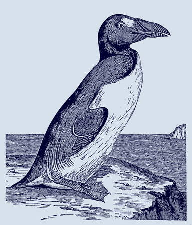 Extinct great auk (pinguinus impennis) sitting on a rock near the sea. Illustration after an engraving from the 19th century