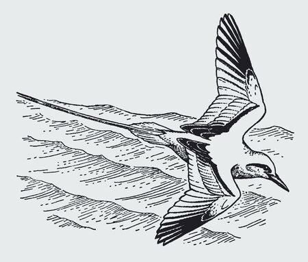 Red-tailed tropicbird (phaethon rubricauda) flying over the wavy sea. Illustration after a historic engraving from the early 20th century Иллюстрация