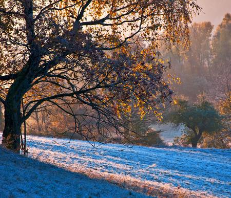 awaking: Autumn awaking