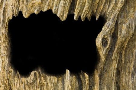 Old timber background photo