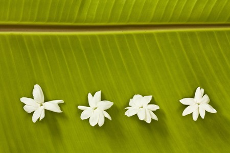 Jasmine on banana leaf background