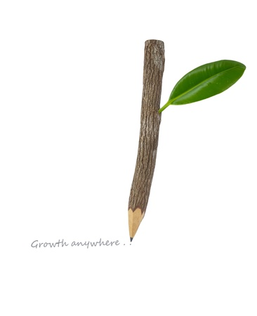 Wood pencil with green leaf Stock Photo