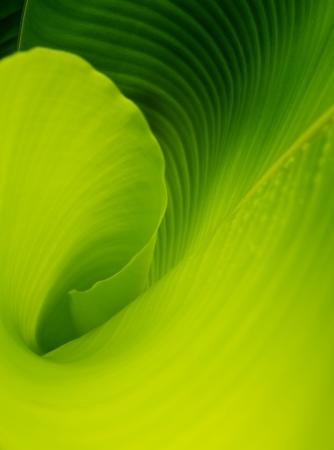 Banana leaf background Stock Photo - 9482342