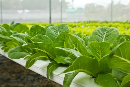 Hydroponic Farm Stock Photo