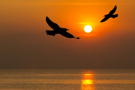 Silhouette of birds flying over the sea in sunset time