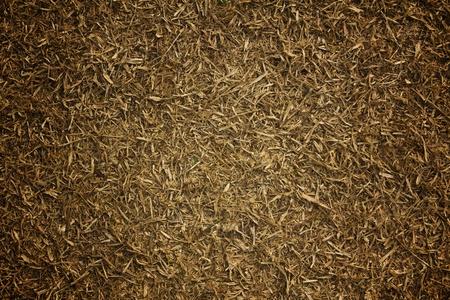 Dry grass lawn