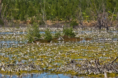Landscape of Mangrove degradation Stock Photo