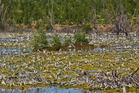 degradation: Landscape of Mangrove degradation Stock Photo