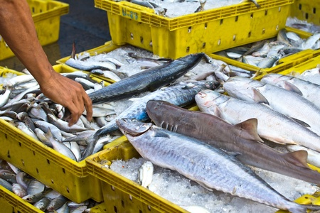 Fresh sea fish Reklamní fotografie