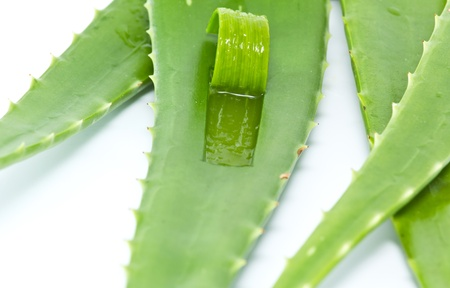 Aloe vera peeled Reklamní fotografie