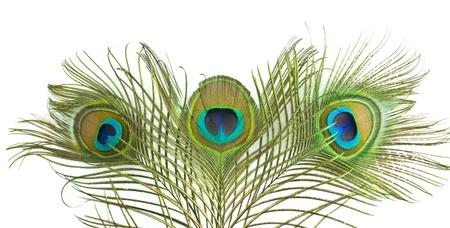 pluma de pavo real: Plumas de pavo real sobre fondo blanco
