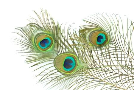 piuma di pavone: Piuma di pavone su sfondo bianco Archivio Fotografico