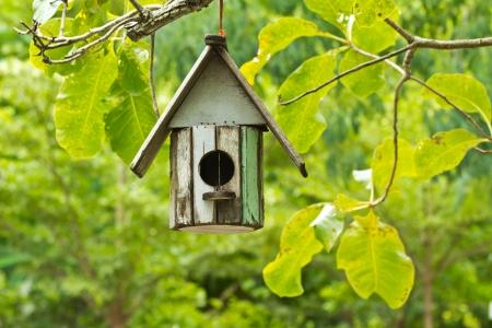 �rboles con pajaros: Birdhouse colgar en el �rbol Foto de archivo