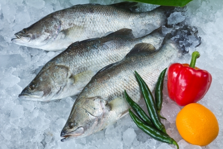 calcarifer: Fresh Seabass and vegetables chilled on ice