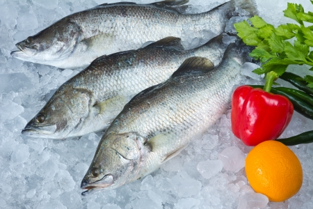 Fresh Seabass and vegetables chilled on ice photo