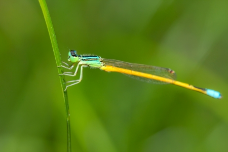 Dragonfly in green field Stock Photo