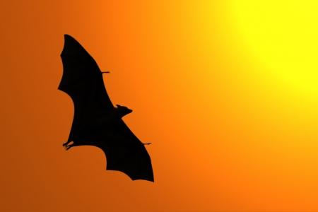 Silhouette of flying fox in twilight