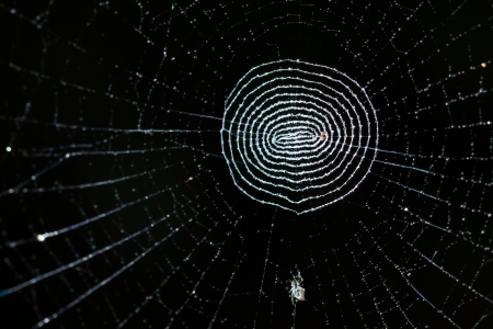 Cobweb on black background Stock Photo