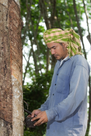 Asian farmer in Para rubber garden photo