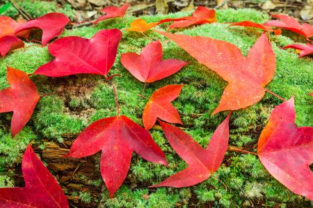 hojas de colores: Hojas de colores y musgo Foto de archivo