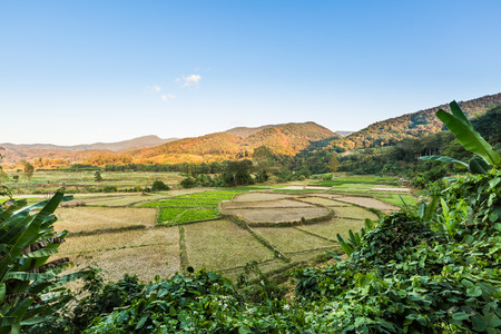 blue mountains tree frog: Beautiful landscape of countryside in Thailand