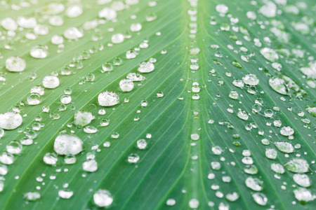 Rain drops on green leaf