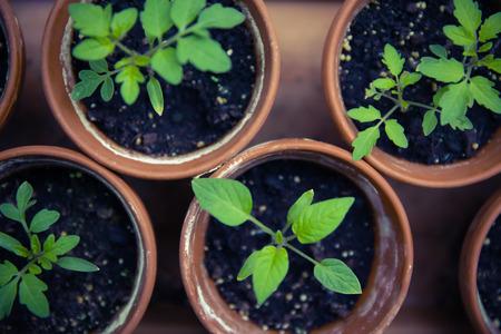 breeding: urban gardening breeding