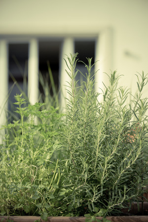 herbage: bio self-sufficiency herbage