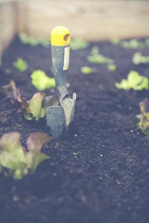 urban gardening: urban gardening with raised bed