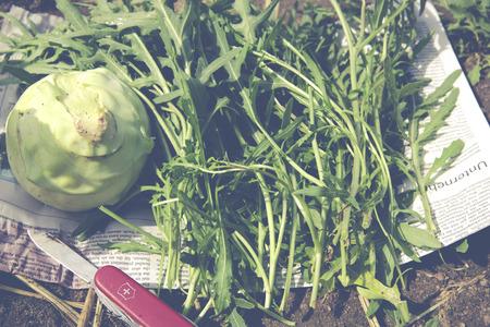 upbringing: urban gardening cabbage rocket