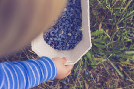 guerilla: child harvest bluebeery