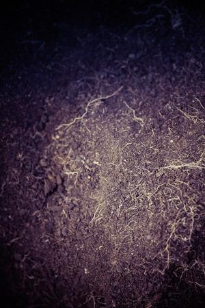 seed bed: humic earth humus soil