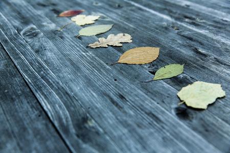 Bunte Blätter fallen Herbst Laub Standard-Bild - 47225280