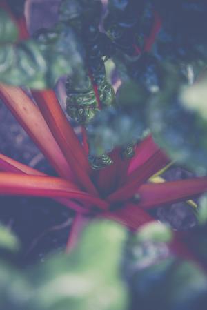 Urban Gardening Selbstversorger mit Hochbeet Standard-Bild - 47225387