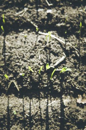 upbringing: winter barley grown