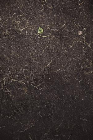 humus soil: humic earth humus soil