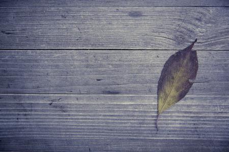 autumnally: colorful fall leaves autumn foliage