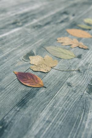 Bunte Blätter fallen Herbst Laub Standard-Bild - 47225495