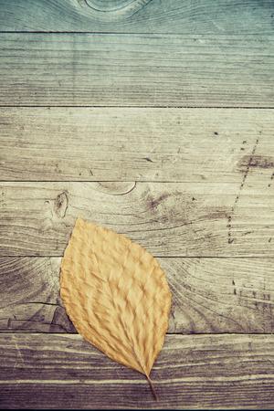 Bunte Blätter fallen Herbst Laub Standard-Bild - 47225600