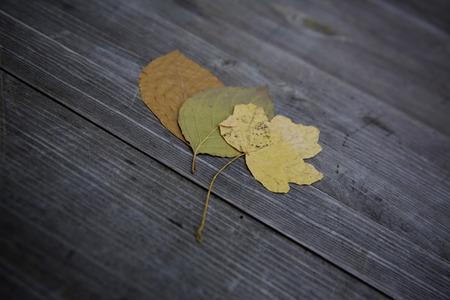 Bunte Blätter fallen Herbst Laub Standard-Bild - 47225616