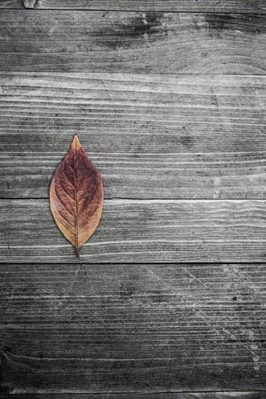 Bunte Blätter fallen Herbst Laub Standard-Bild - 47225770