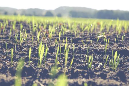 farming area: winter barley grown