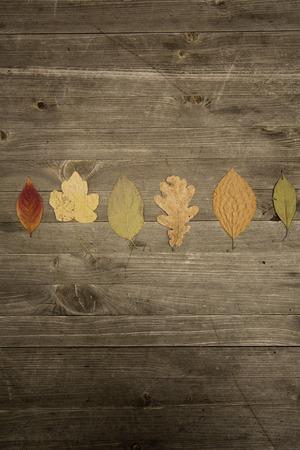 Bunte Blätter fallen Herbst Laub Standard-Bild - 47225921