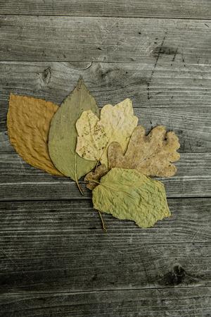 Bunte Blätter fallen Herbst Laub Standard-Bild - 47225918