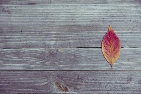 Bunte Blätter fallen Herbst Laub