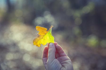 Stapel von bunten Blätter im Herbst Standard-Bild - 50396021