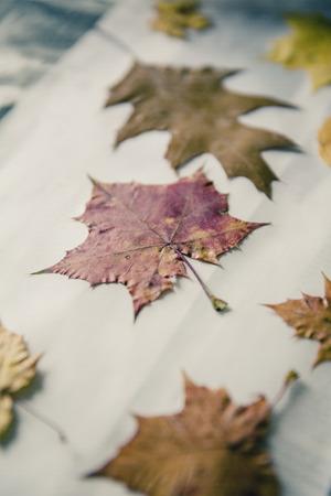 Stapel von bunten Blätter im Herbst Standard-Bild - 50396025