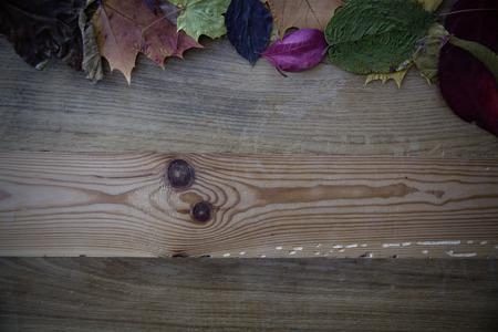 Stapel von bunten Blätter im Herbst Standard-Bild - 50396322